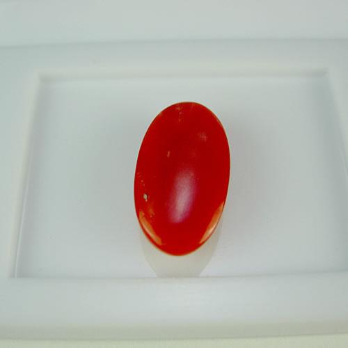 赤珊瑚 18×9mm 小判 ジュエリールース dg265 画像