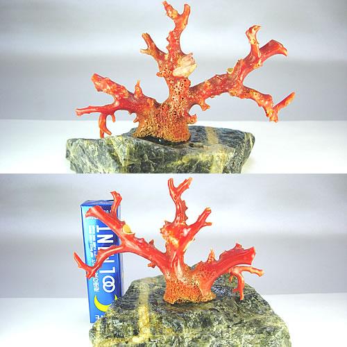 血赤珊瑚 枝 ミニ盆栽サイズ オブジェ sb385 画像
